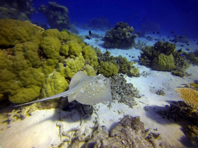 3 Day 3 Night Liveaboard Trip Townsville Scuba Dive Great barrier Reef and Yongala Wreck