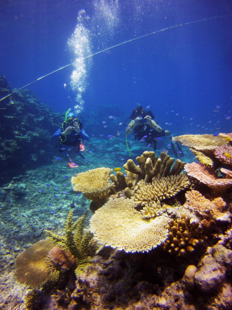 Townsville Magnetic Island Great Barrier Reef Day Trip Dive