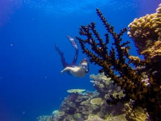Great Barrier Reef Townsville Magnetic Island Lodestone Reef Snorkel Dive Day Trip Freedive
