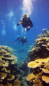 Scuba Divers at the Great Barrier Reef