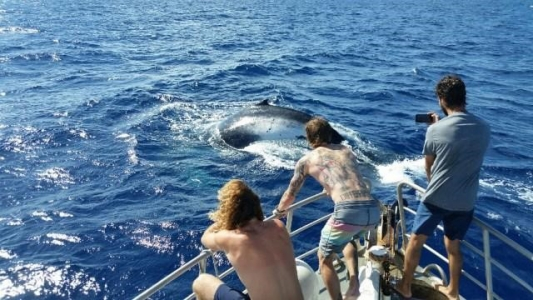 crew and passnegers standing on the bow of mv adrenalin taking pictures of a humpback whale breaching the surface