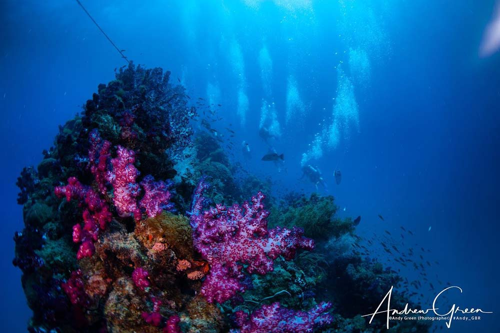 super colourful corals growing on the wreck of the ss yongala