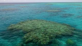 Great Barrier Reef Townsville - Lodestone Reef - Snorkel