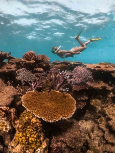 Female snorkeller underwater swimming over the top of coral gardens at Lodestone Reef