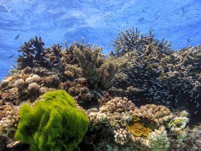 Shot of different types of corals underwater