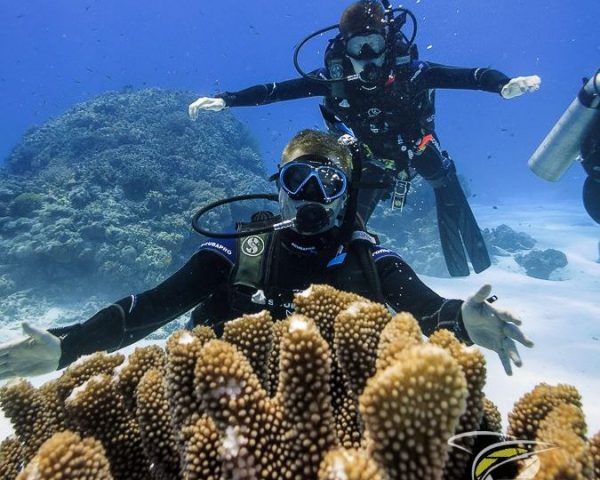 two divers at a coral
