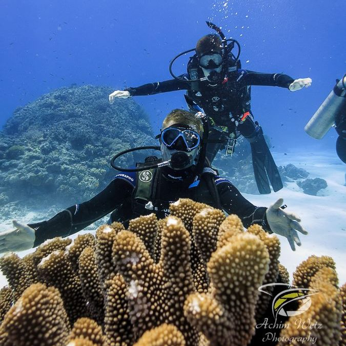 scuba divers posing in the background with coral in the foreground