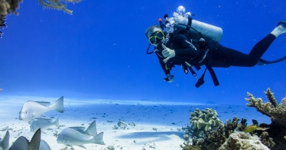 scuba diver swimming along the sandy bottom with fishes throwing up the hang loose hand sign