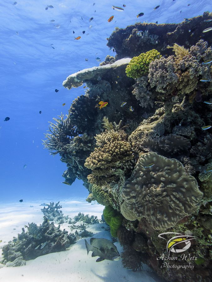 coral reef stucture stretching from the sandy bottom to the surface of the water