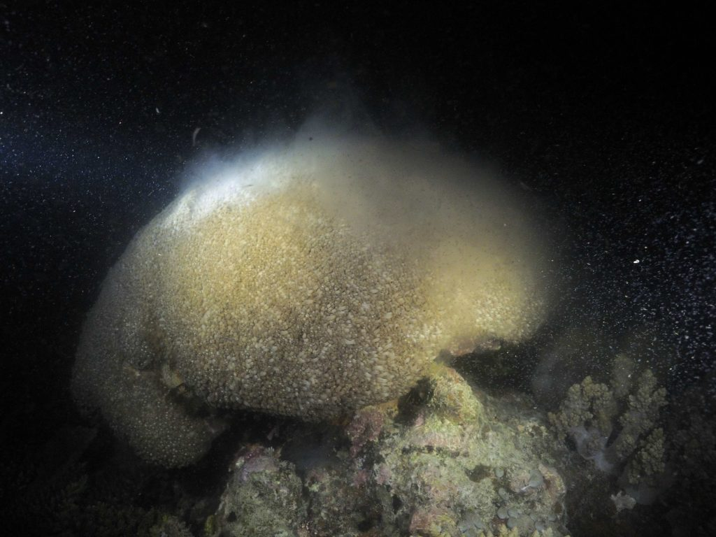 coral spawning liveaboard townsville great barrier reef