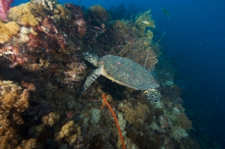 SS Yongala Wreck Townsville Magnetic Island SCUBA Dive Day Trip Turtle