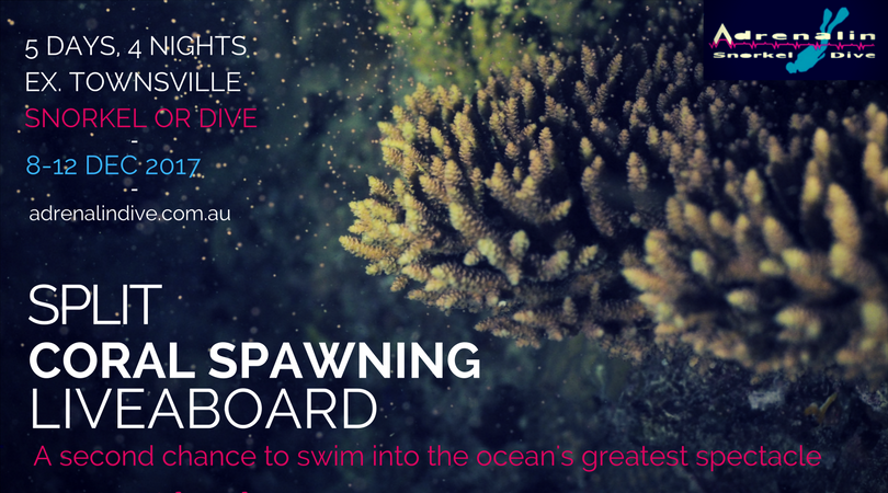 Flyer for Split Coral Spawning Liveaboard event by Adrenalin Snorkel and Dive