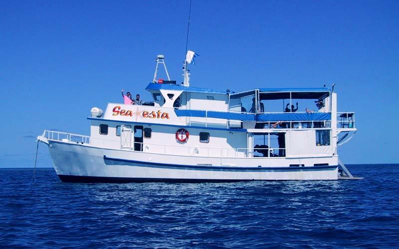 profile of sea esta on the reef