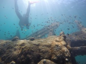 part of motlke wreck with diver in the background