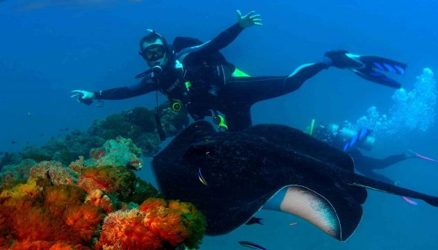 scuba diver swimming alongside manta ray