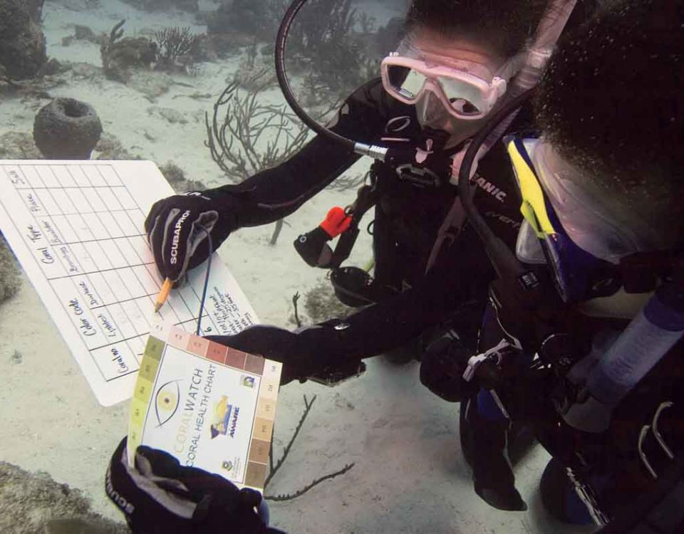 Divers for Project AWARE looking at charts underwater