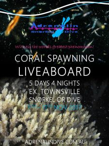 Coral Spawning Liveaboard Townsville