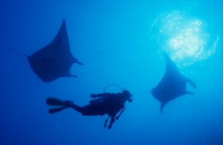 SS Yongala Wreck Townsville Magnetic Island SCUBA Dive Manta Rays