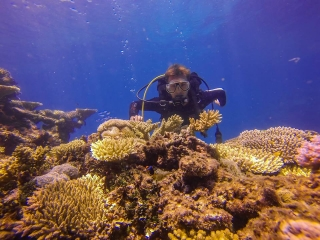 Great Barrier Reef Townsville Magnetic Island Lodestone Reef Snorkel Dive Day Trip Clown Fish
