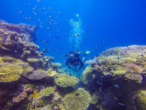 scuba diver swimming up to a coral garden with schools of fish above it