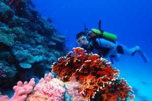 Diver looking wide-eyed at coral