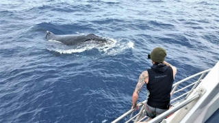 Trip director Perry Moore take a picture of a humpback whale whilst standing on the bow of MV Adrenalin