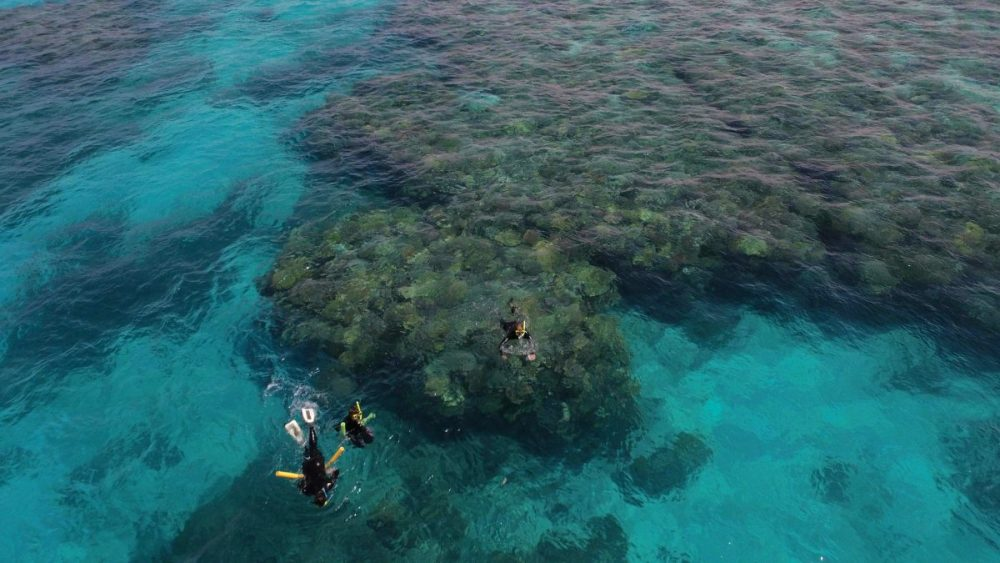three snorkellers swimming over corals on lodestone reef