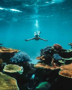 Male snorkeller with outstretched arms swimming underwater towards corals