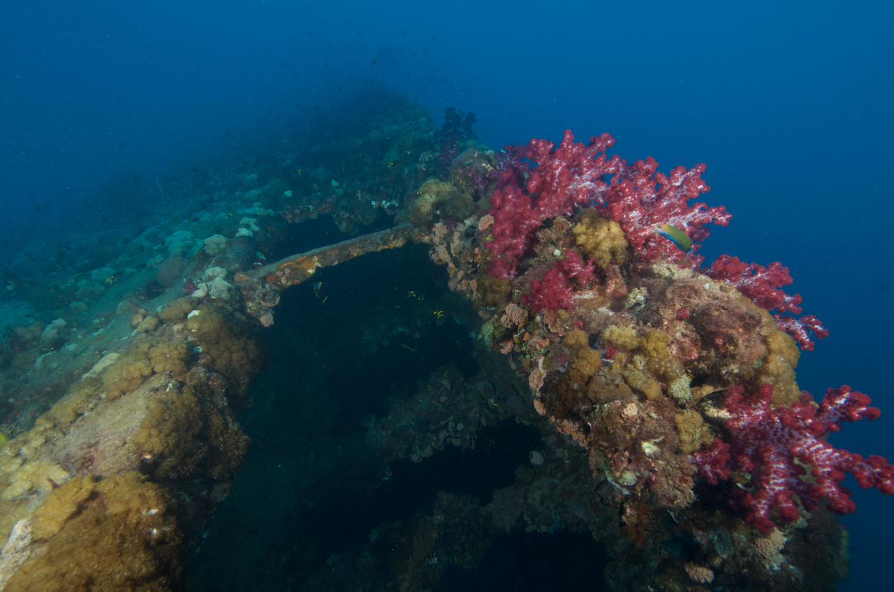 SS Yongala Wreck Townsville Magnetic Island SCUBA Dive Day Trip