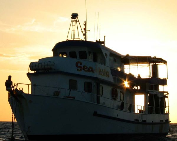 sea esta on the reef with the the sun setting behind it