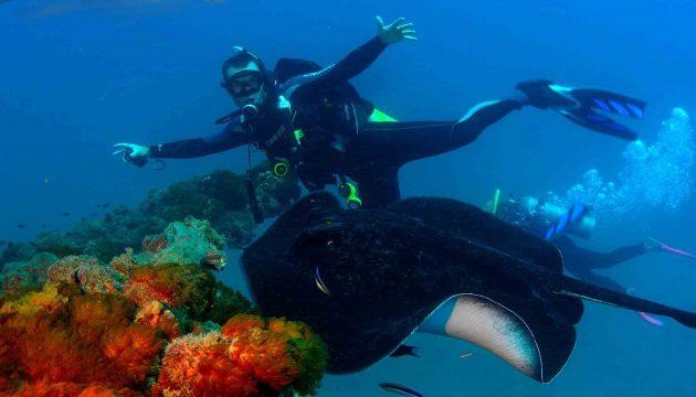 scuba diver swimming alongside manta ray