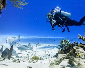 diver swimming past a school of fish and posing for the camera