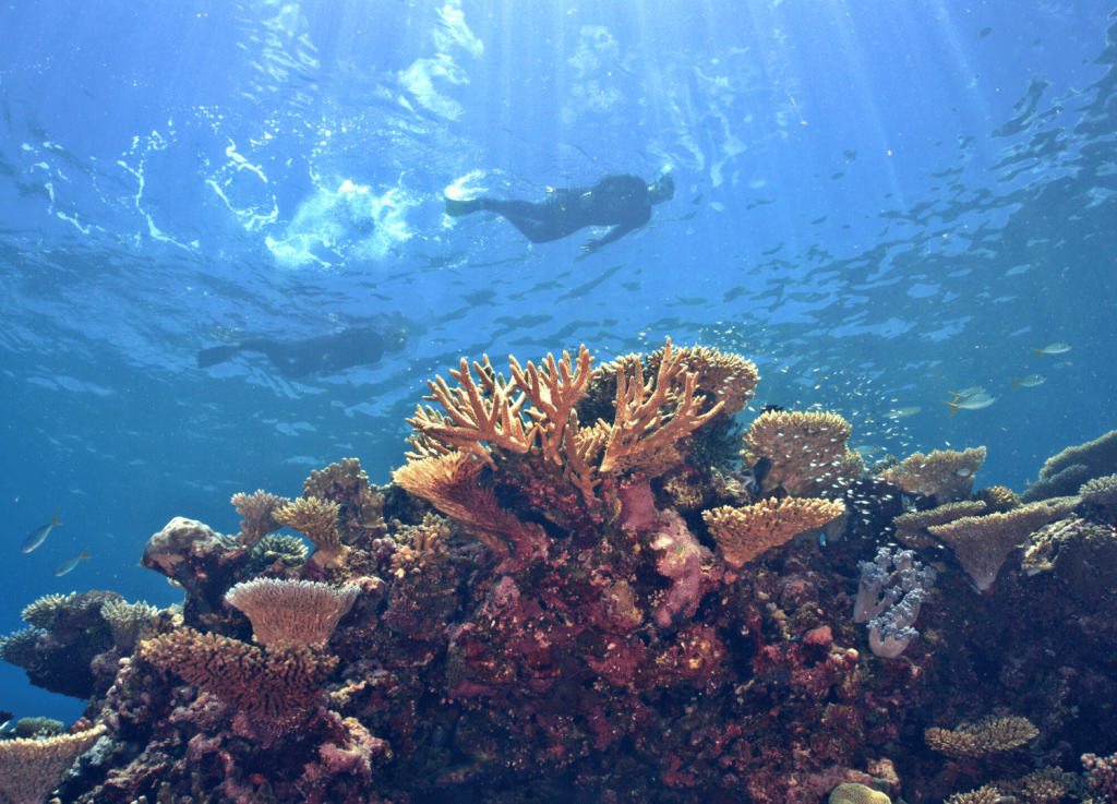 Things to do in Townsville these school holidays Snorkel over the Great Barrier Reef