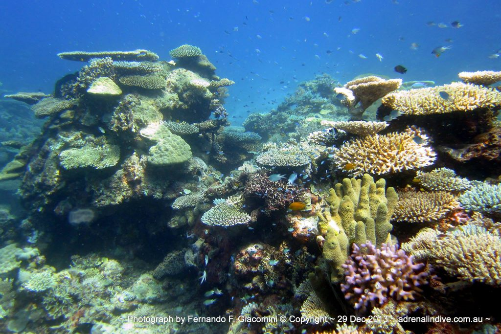 Great Barrier reef in Townsville