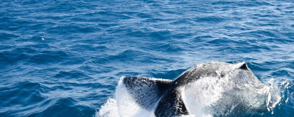 Whale Watching Townsville