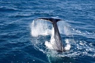 Whale watchers love Townsville North Queensland