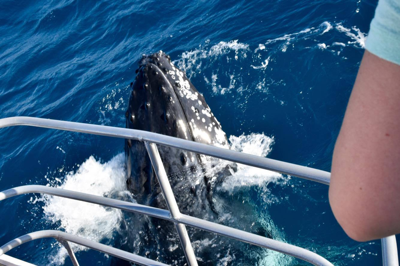 Get the Adrenalin pumping with whale watching in townsville on the GBR