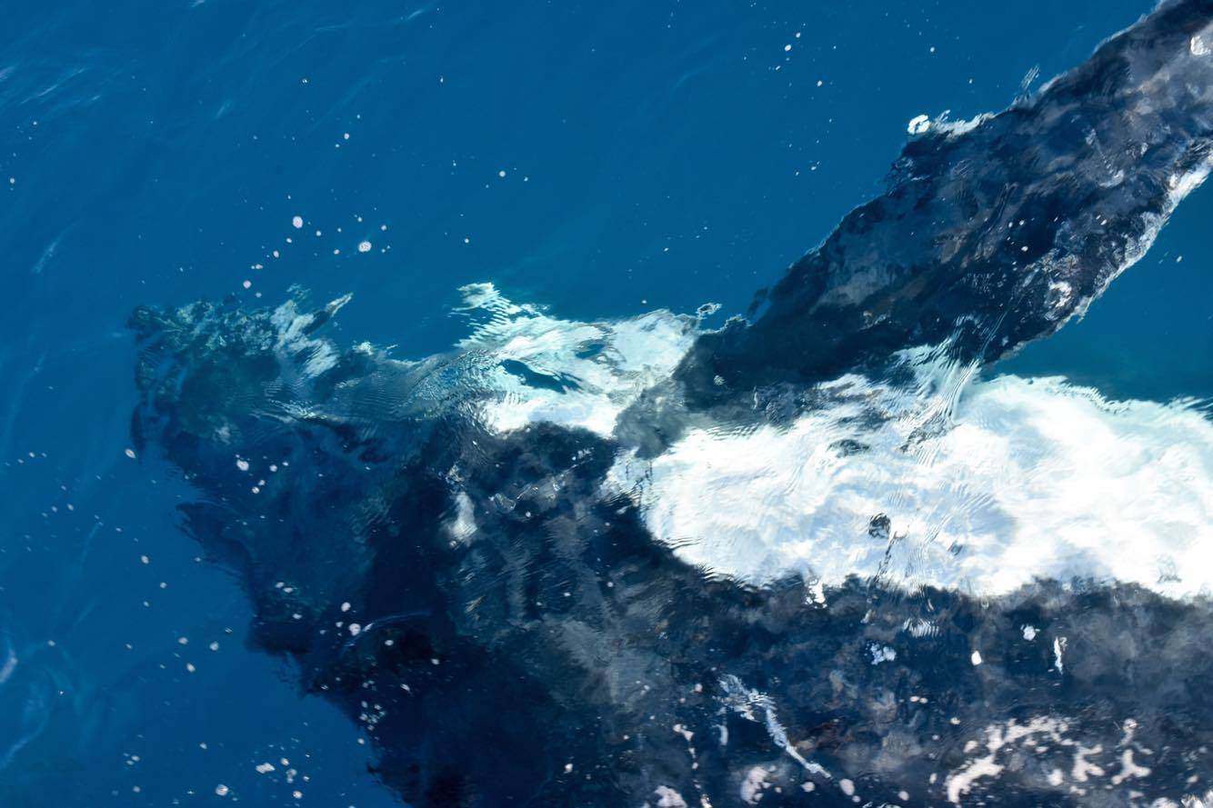 Whale watching on Great Barrier Reef Tour Townsville